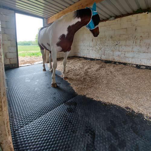 Mayo Mattress in use Horse