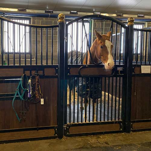 Stable Mat fit in a dressage stable
