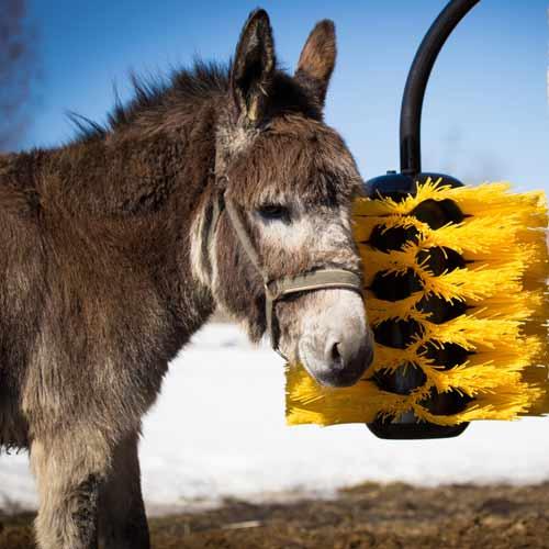 Donkey with easyswing brush