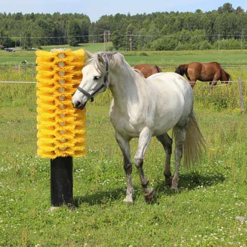 Horse Scratching Brush