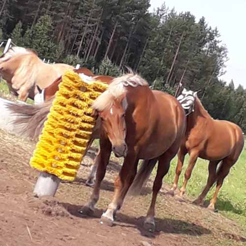 Horse using easyswing scratching totem